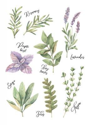 Poster Illustrazione ad acquerello Elementi di design floreale.
