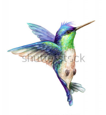 Poster illustrazione dell'acquerello, colibrì di volo isolato su fondo bianco, clipart esotici, tropicali, selvaggi di vita