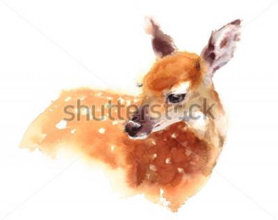 Poster Illustrazione dipinta a mano del fulvo dei cervi del bambino dell'acquerello isolato su fondo bianco