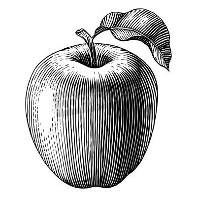 Poster Illustrazione incisa di un vettore mela