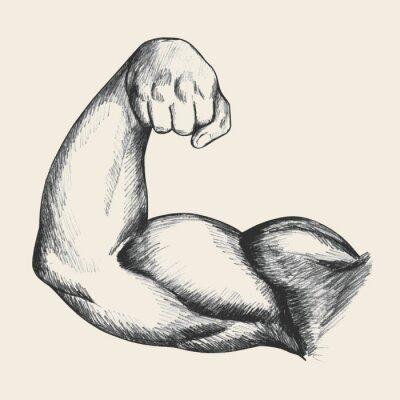 Poster Illustrazione Sketch di muscoloso braccio destro maschio umano