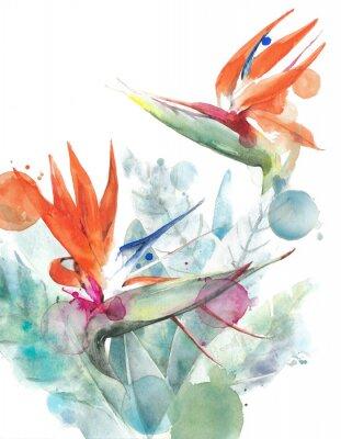 Poster Illustrazione tropicale della pittura dell'acquerello di strelizia dell'uccello del paradiso dei fiori isolata su fondo bianco