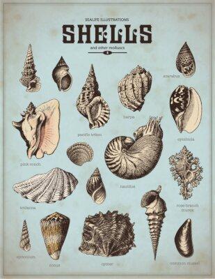 Poster illustrazioni mare-vita: coperture (1)