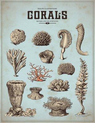 Poster illustrazioni mare-vita: coralli, spugne e anemoni di mare (1)