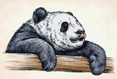 Poster incidere inchiostro pareggio panda illustrazione