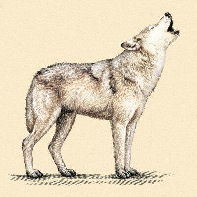 Poster incidere lupo illustrazione