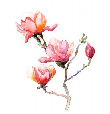 Poster l'acquarello magnolia isolato su sfondo bianco