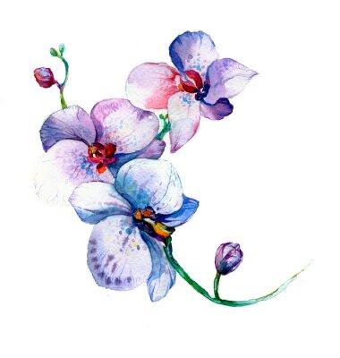 Poster la nuova vista di orchidea acquerello disegnato a mano per la cartolina isolato su sfondo bianco