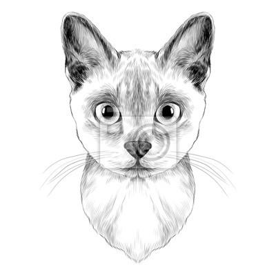 La Testa Di Un Gatto Razza Australiana Nebbia Simmetrica Sketch