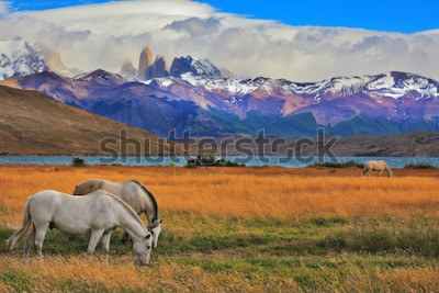 Poster Lago Laguna Azul in montagna. Sulla riva del lago al pascolo di cavalli. Paesaggio impressionante nel parco nazionale Torres del Paine, Cile