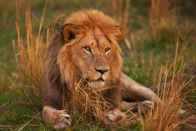 Poster leone