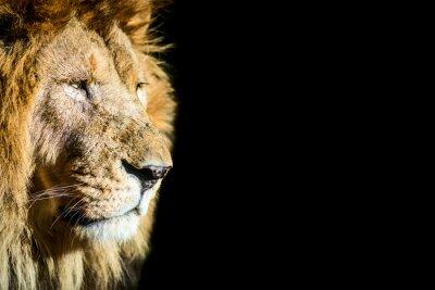 Poster leone - leone