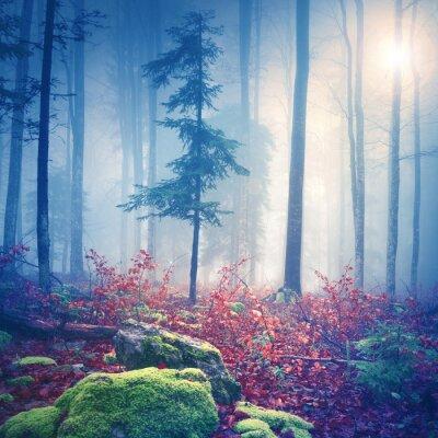 Poster Luce magica in foresta nebbiosa con il sole