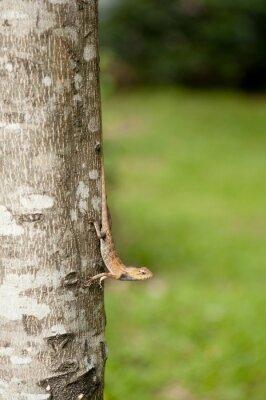 Poster Lucertola variabile sul tronco d'albero