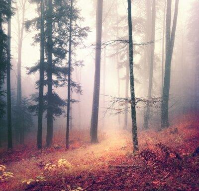 Poster Magia stagione autunnale albero colore foresta con sfondo luminoso percorso rosso arancio. Bella bosco di stagione.