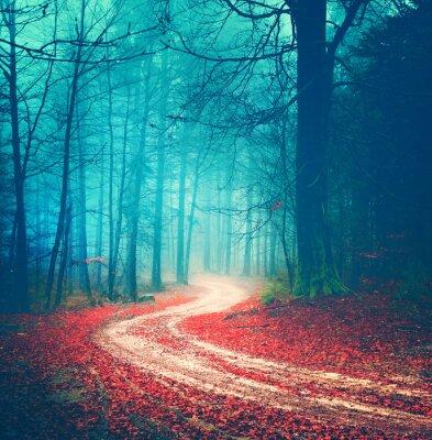 Poster Magic vintage forest road