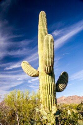 Poster Majestic Saguaro Cactus