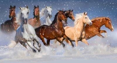 Poster mandria di cavalli correre veloce in inverno campo di neve
