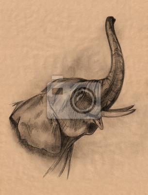 Matita Testa Di Elefante Disegno Manifesti Da Muro Poster Carbone