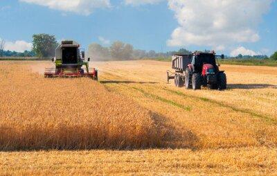 Poster Mietitrebbia e grano trattore raccolta su soleggiata giornata estiva