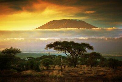 Poster Monte Kilimanjaro. Savanna in Amboseli, in Kenya