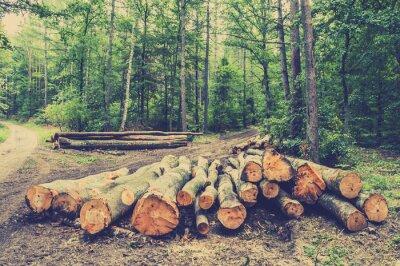 Poster Mucchio di legno nel bosco vicino alla strada, foto d'epoca.