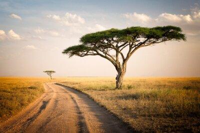 Poster Paesaggio africano - in Tanzania