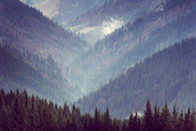 Poster Paesaggio delle colline di montagna della foresta.