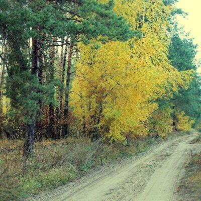 Poster Paese strada in una bella foresta di autunno