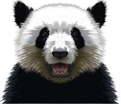 Poster PANDA - Buste