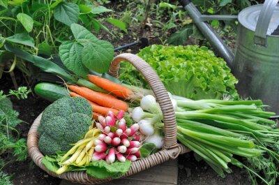 Poster Panier de légumes frais dans potager