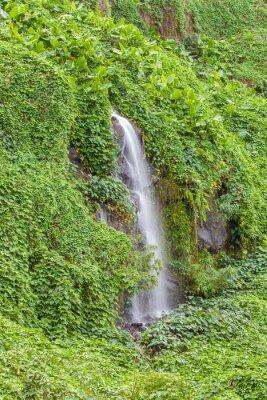Poster paroi humide et Verdoyante, Anse des Cascades, Ile de la Réunion