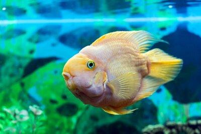 Poster Parrot primo piano di pesce
