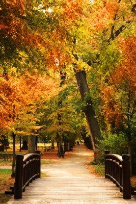 Poster pasarela Parque del otoño
