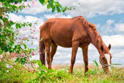 Poster Pascolo cavallo marrone sul pascolo verde con una natura bellissima