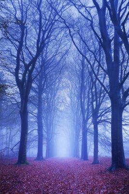 Poster Percorso in una foresta buia e nebbiosa in Olanda