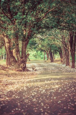 Poster Percorso sotto l'albero-tunnel con i fiori in atmosfere vintage