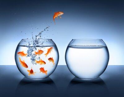 Poster pesce rosso che salta - il miglioramento e la carriera concetto