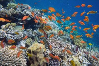 Poster Pesce tropicale sulla barriera corallina