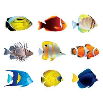 Poster Pesci tropicali insieme vettoriale