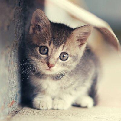 Poster piccolo gattino carino ubicazione all'aperto
