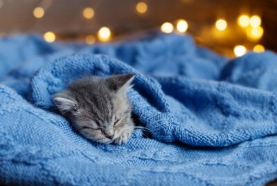 Poster piccolo gattino dormire sotto una coperta