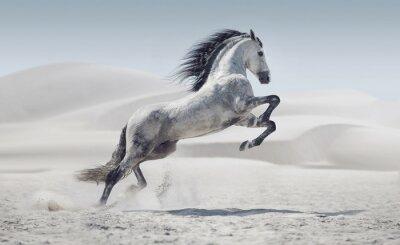 Poster Picture presentando il cavallo bianco al galoppo