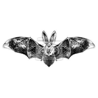 Pipistrello Con Le Ali Aperte Modello Simmetrico Schizzo Grafica