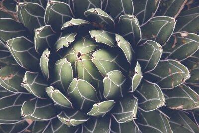 Poster Primo piano di agave pianta grassa, messa a fuoco selettiva, tonificante