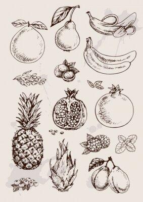 Poster raccolta di disegno isolato mano frutta