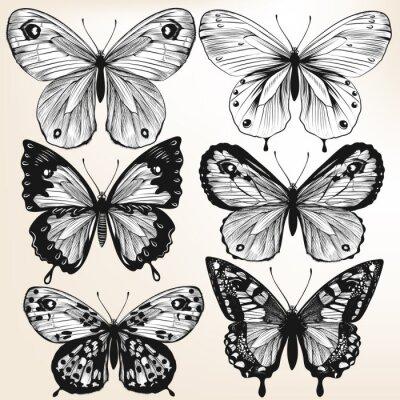 Poster Raccolta di vettore disegnata a mano farfalle dettagliate per la progettazione