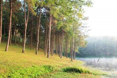Poster Raggi di sole in Natural Abete Woodland