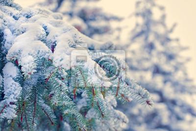 Foto Con La Neve Di Natale.Rami Di Un Albero Di Natale Con La Neve Di Festa Ba Invernali Manifesti Da Muro Poster Sempreverde Nevica No Myloview It