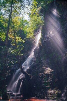 Poster Rayos de sol a través de las hojas del bosque en la Cascada de Hortas, Galizia